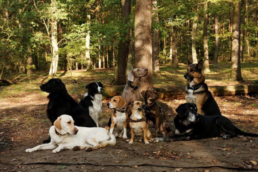 Aufgaben des Verbandes - BHD - Berufsverband der Hundebetreuer und Dogwalker
