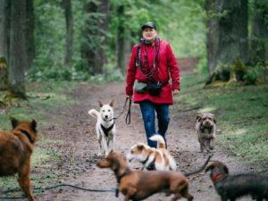 Gassi-Service: Mit der Hunde-Gang ins Grüne