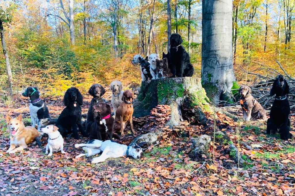 Ordentlich was los im Hundeauslaufgebiet! (Foto: L. Freudenreich)