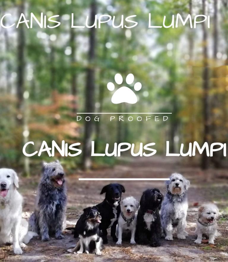 Canis Lupus Lumpi